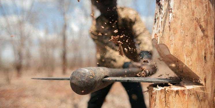 کاهش قطع درختان